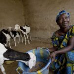 Photo by Geoff Bugby, courtesy of Heifer International